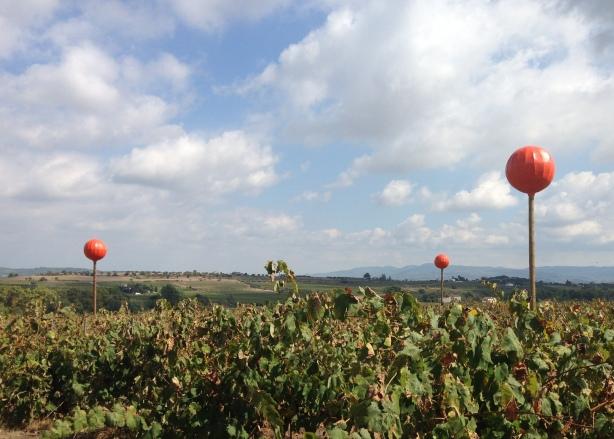 Las viñas de Ton Rimbau